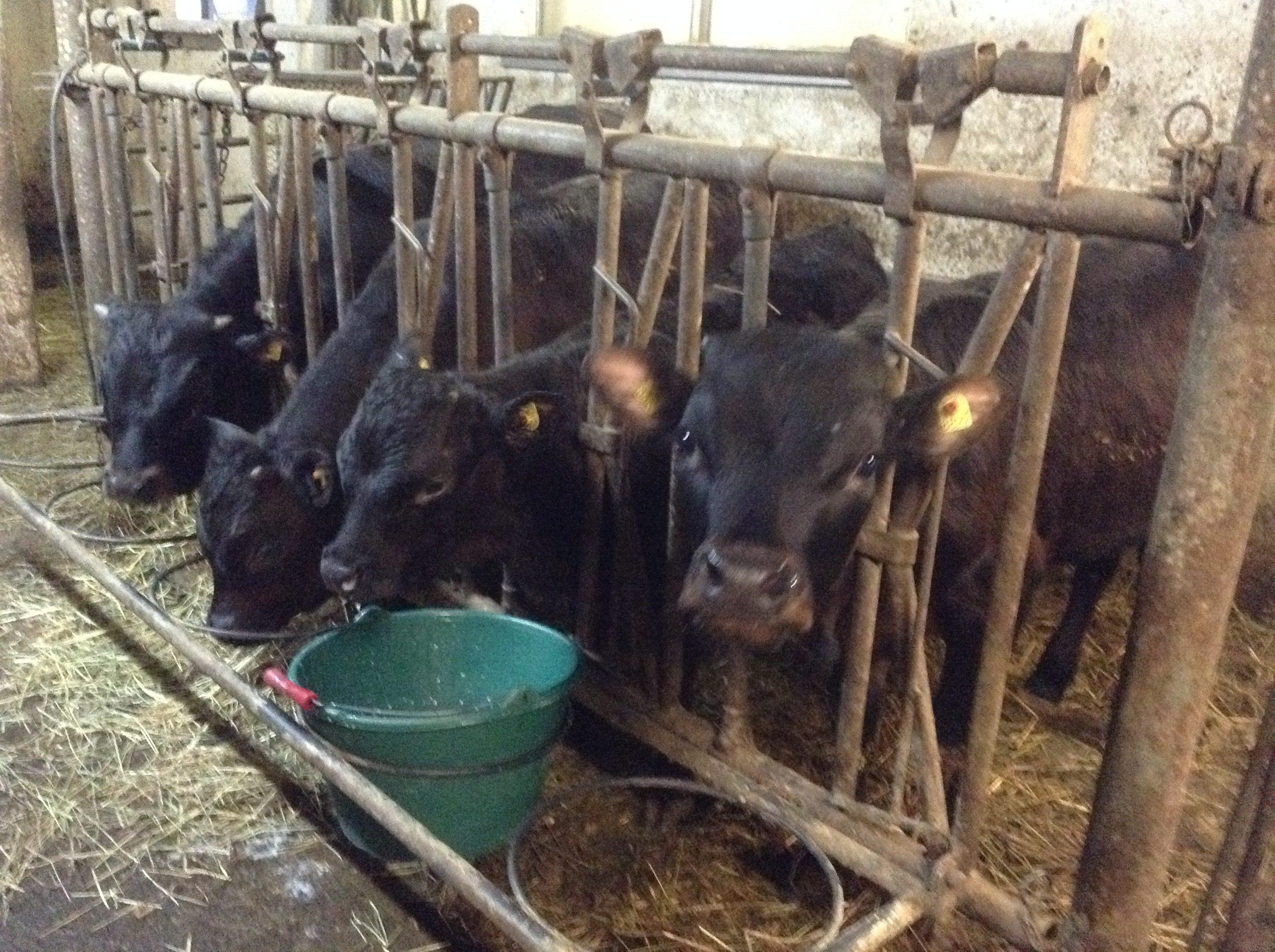 Visite de la ferme