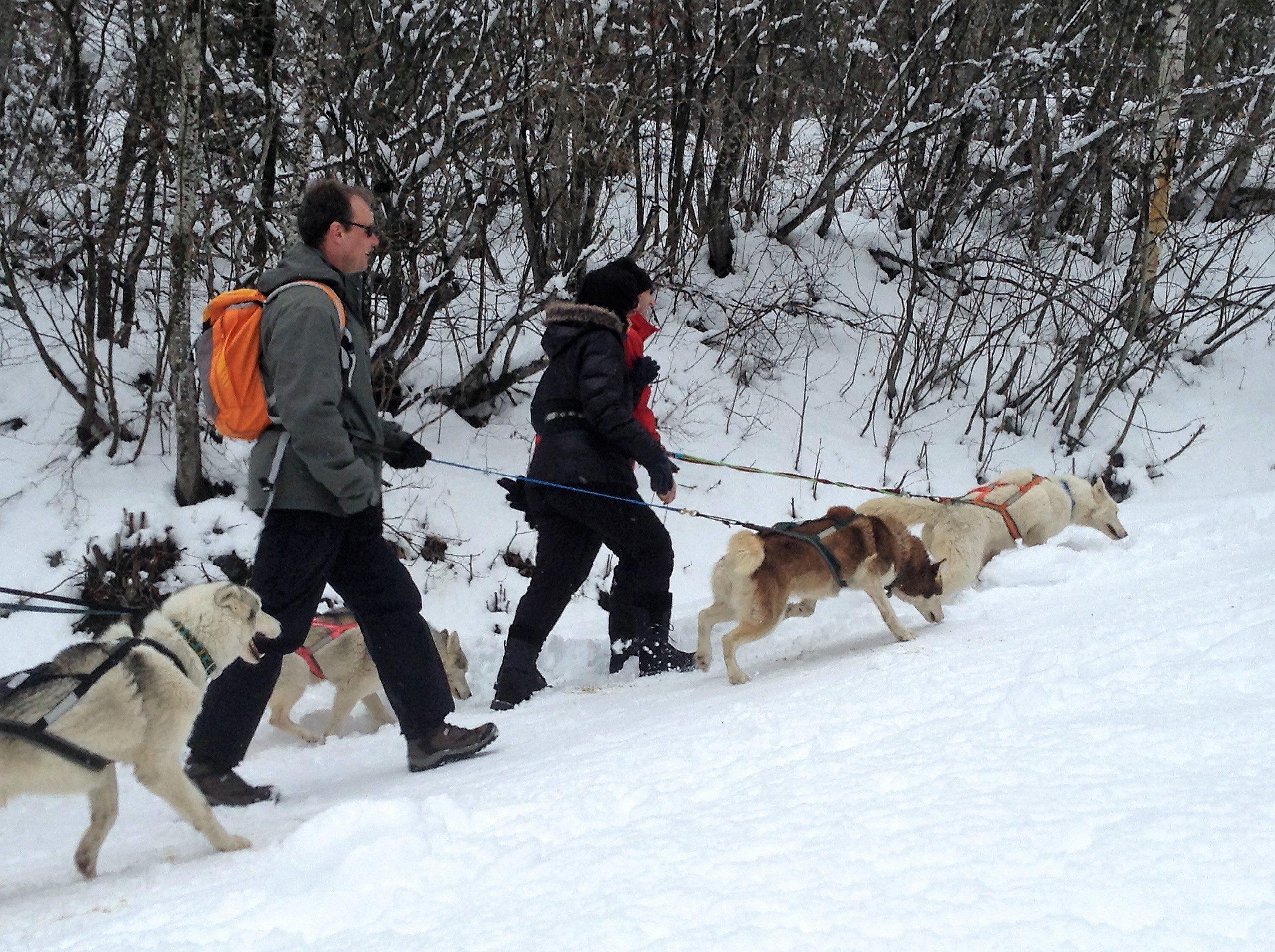 Cani-rando hiver