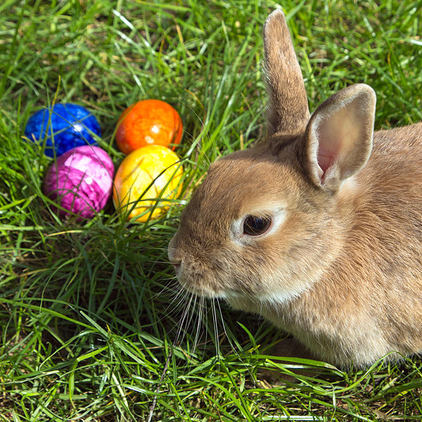 Visit of the Easter Bunny