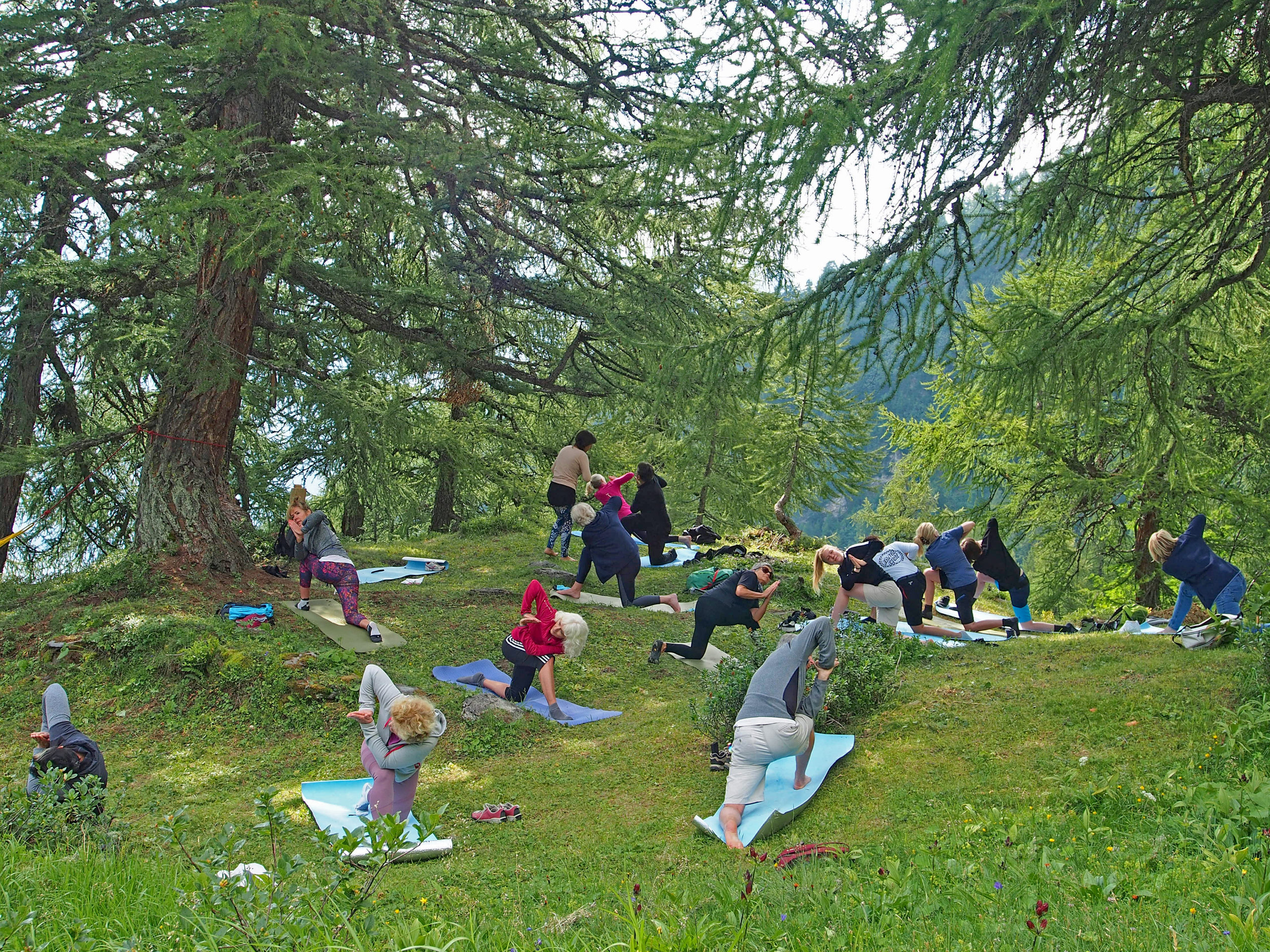 Yoga under the larches