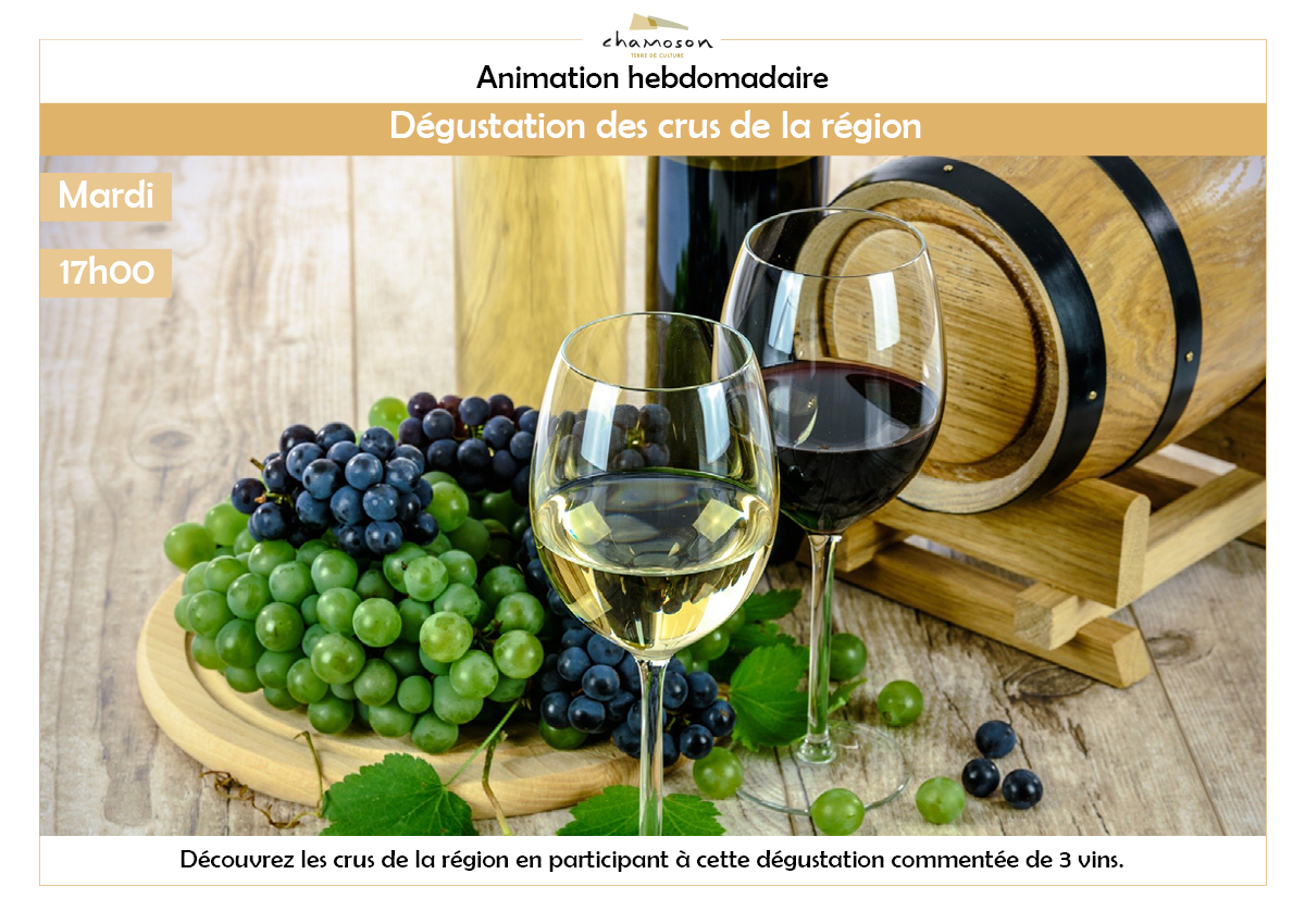 Discovery of the wines of the region