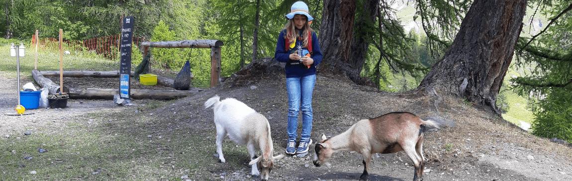fillette-chèvres