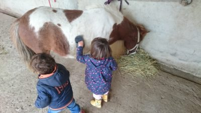 Pony my friend